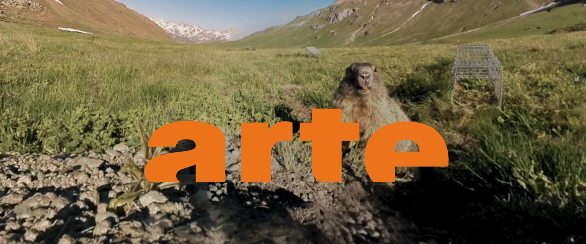 Film marmottes pour Arte